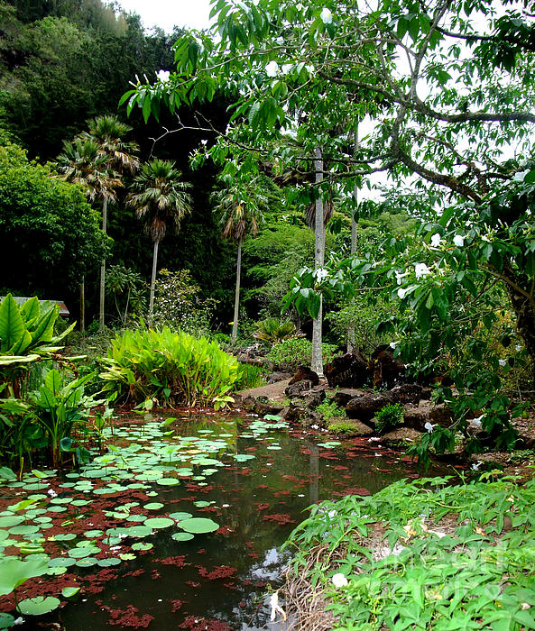 Jim Fitzpatrick Photograph - Waimea Valley In The North Shore Of Oahu Hawaii by Jim Fitzpatrick
