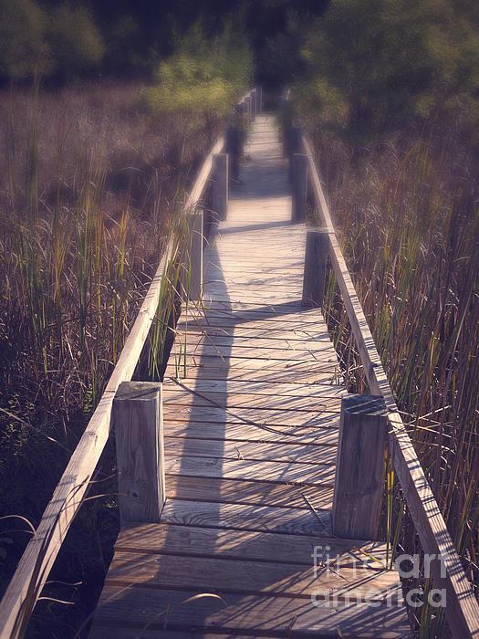 Appalachian Trail Photograph - Walkway Through The Reeds Appalachian Trail by Edward Fielding