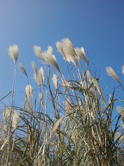 Weeds Photograph - Warmth by Anastasia Konn