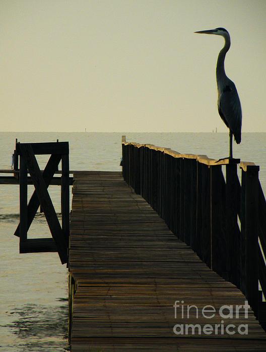 Blue Heron On Pier Silhouette Photograph - Watchful Eyes by Joe Jake Pratt
