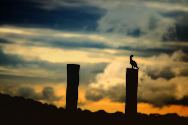 Landscape Photograph - Watching The Sunrise by Karol Livote
