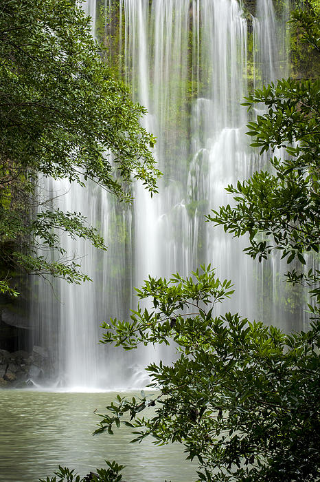 Hummingbird Photograph - Waterfall Through Trees by Juan Carlos Vindas