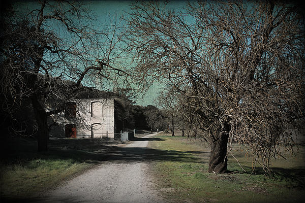 Sycamore Grove Park Photograph - Way Back When by Laurie Search