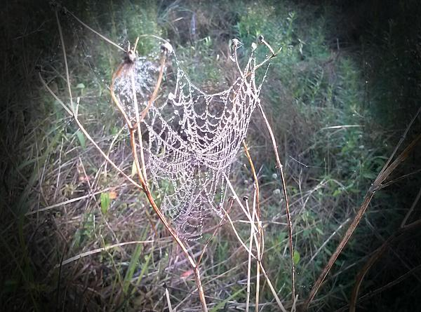 Landscape Photograph - Web Of Dew by Chasity Johnson