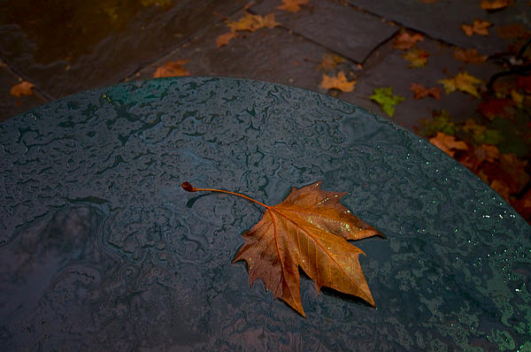 City Photograph - Wet Leaf by Mike Horvath