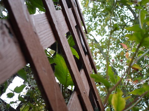 Fence Photograph - Where The Fence Crosses by Jenna Mengersen