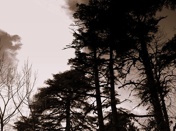 Whispering Trees Photograph by Salman Ravish