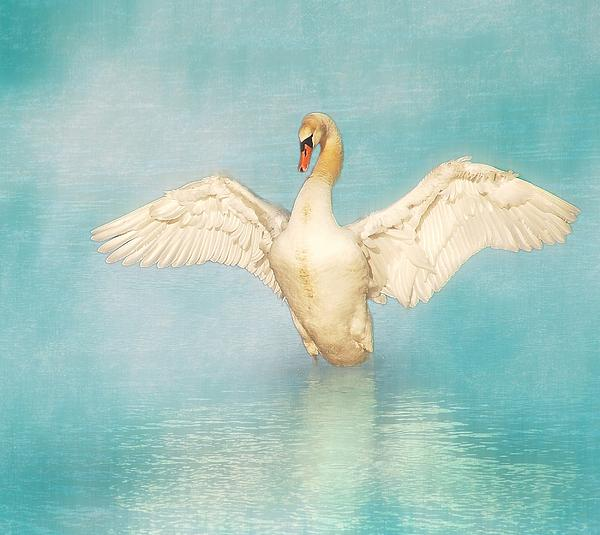 Swan Photograph - White Angel by Hannes Cmarits