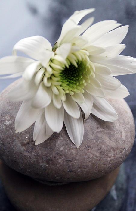 Flower Photograph - White Blossom On Rocks by Linda Woods