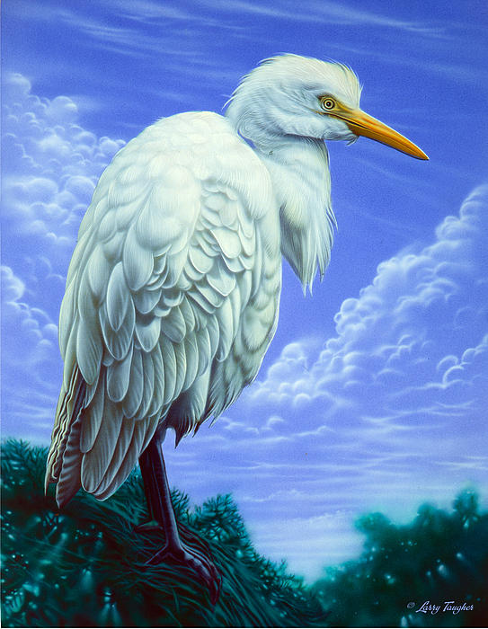 White egret painting by larry taugher for White heron paint