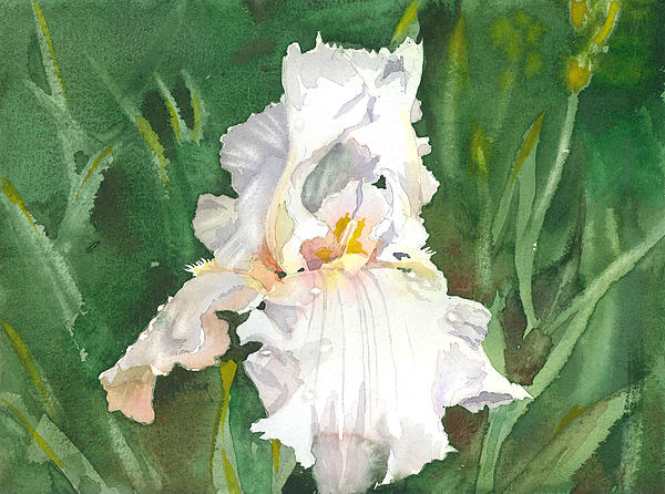 Flower Painting - White Iris by Spencer Meagher