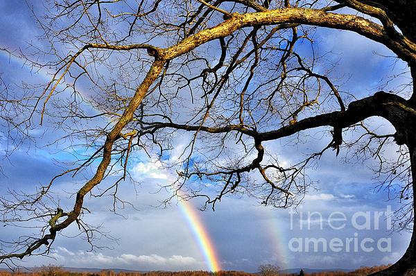 Rainbow Photograph - White Oak And Double Rainbow by Thomas R Fletcher