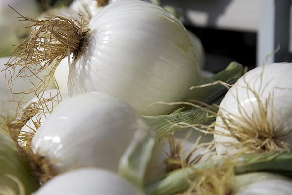Onions Photograph - White Onions by Terry Horstman