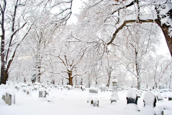 Graveyard Photograph - White Peace by Emily Stauring