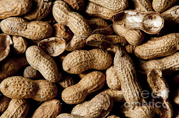Nut Photograph - Who Can Eat Just One by Wilma  Birdwell