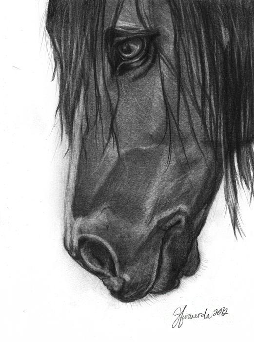 Horse Drawing - Wide Eyed Wanderer by J Ferwerda