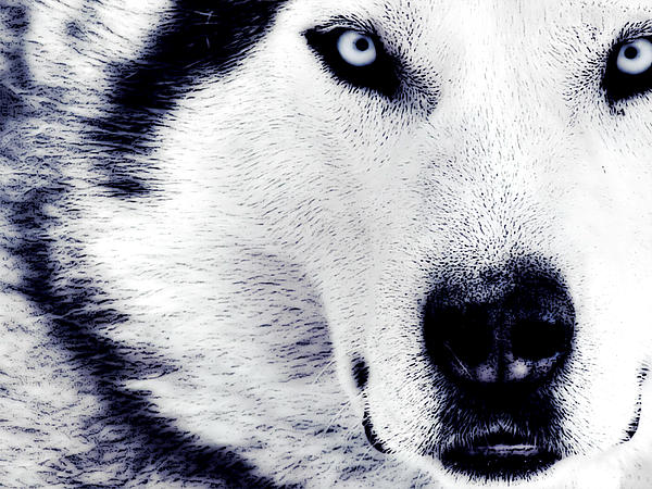 Dog Photograph - Wild Eyes by VRL Art