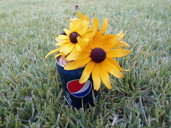 Sunflowers Photograph - Wild Flowers by Jenna Mengersen