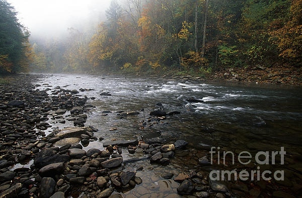 Williams River Photograph - Williams River Autumn Mist by Thomas R Fletcher