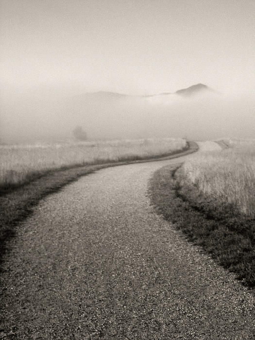Winding Photograph - Winding Path And Mist by Marilyn Hunt