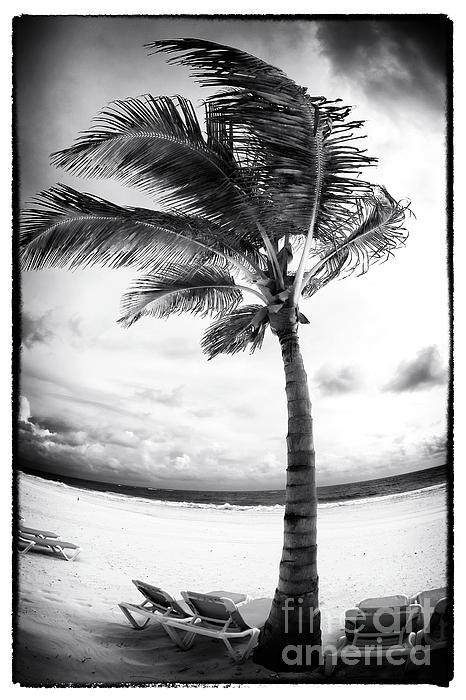 Windy Photograph - Windy Palm by John Rizzuto