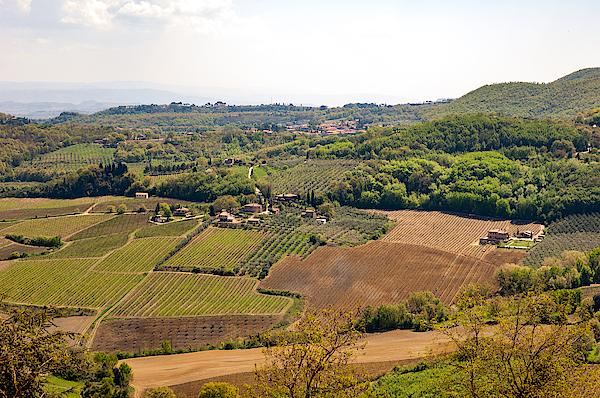 Wine Fields In Tuscany Photograph by Jakob Montrasio