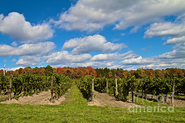 Finger Lakes Photograph - Wine In Waiting by William Norton