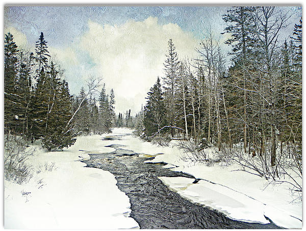 Winter Beauty  Photograph by Dianne  Lacourciere