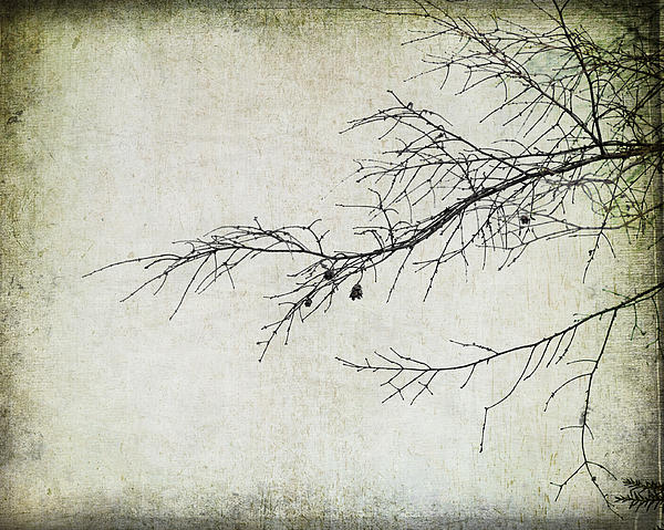 Branch Photograph - Winter Branch by Suzanne Barber
