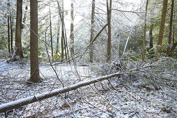 Winter Photograph - Winter Fallen Tree by Thomas R Fletcher