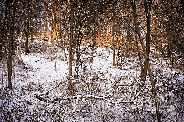 Winter Photograph - Winter Forest by Elena Elisseeva
