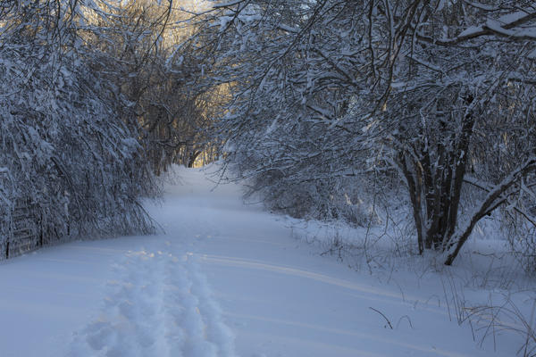 Andrew Pacheco Photograph - Winter Hike by Andrew Pacheco