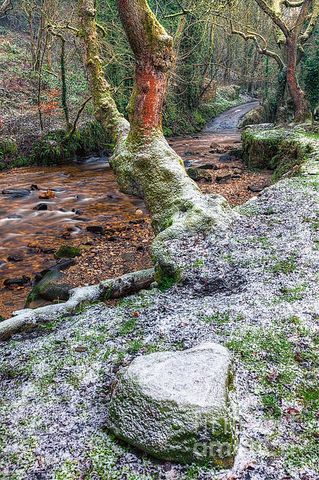 Countryside Photograph - Winter In The Woods by Adrian Evans