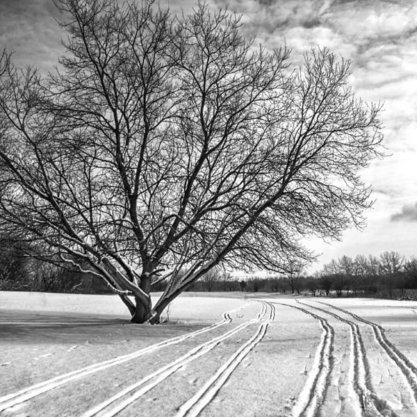 Tree Photograph - Winter Lines by Lauri Novak