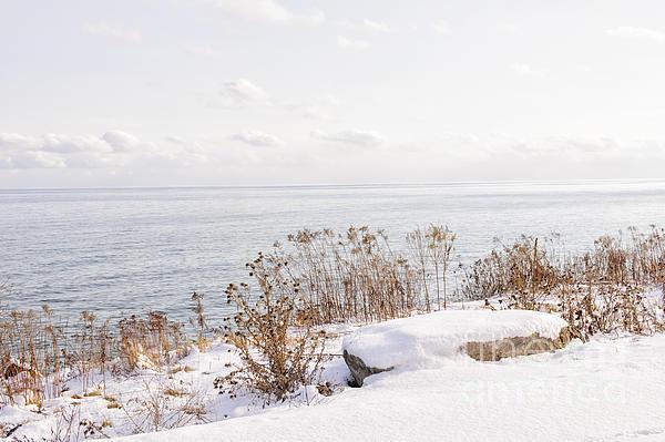 Plants Photograph - Winter Shore Of Lake Ontario by Elena Elisseeva