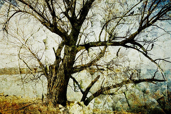 Tree Photograph - Winter Tree At The  Lake Shore  by Ann Powell