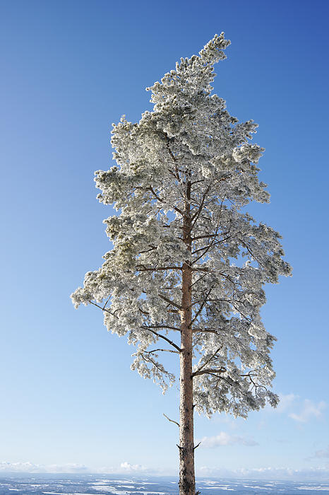 Europe Pastel - Winter Tree Germany by Francesco Emanuele Carucci