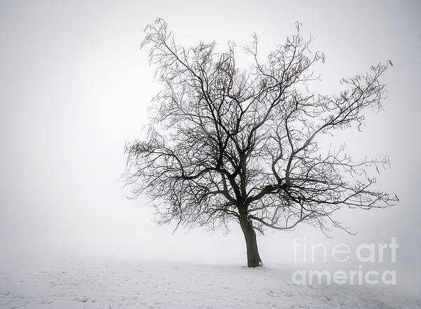 Tree Photograph - Winter Tree In Fog by Elena Elisseeva