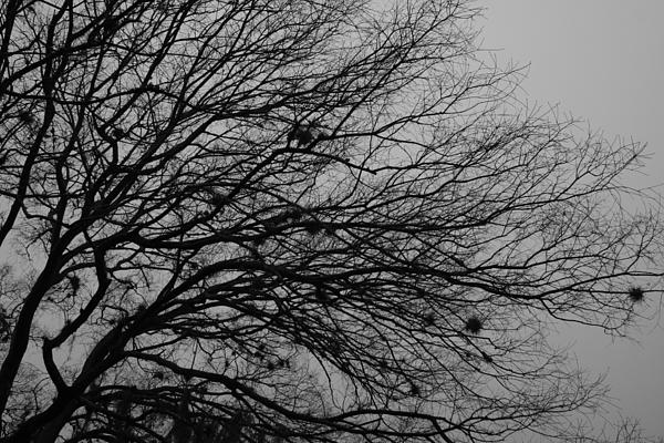 Black And White Photograph - Winter Tree by Kimberly Oegerle
