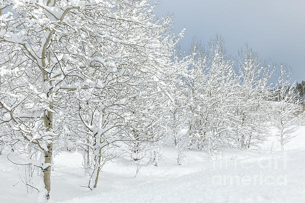 Winter Photograph - Winters Glory - Grand Tetons by Sandra Bronstein