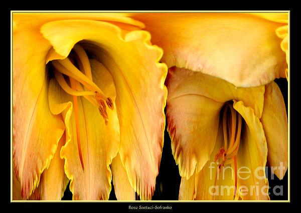 Daylily Photograph - Yellow Daylily Abstract by Rose Santuci-Sofranko