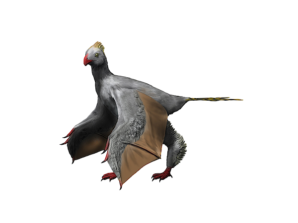 Yi Qi Is An Extinct Theropod From The Late Jurassic Of China. Drawing by Nobumichi Tamura/Stocktrek Images