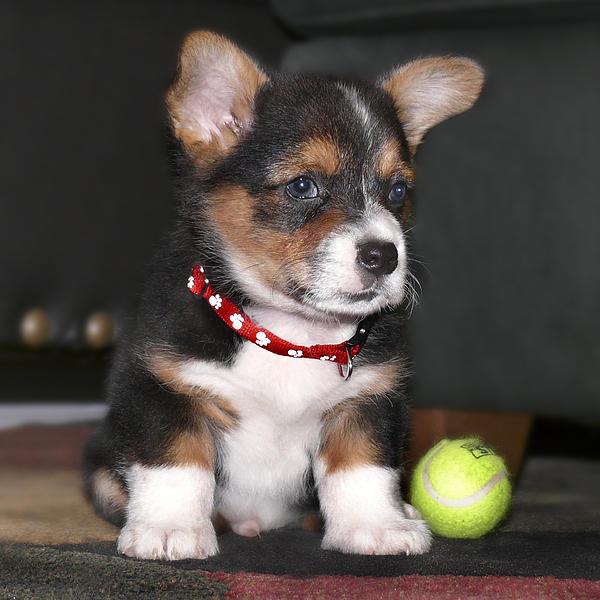 Dog Photograph - Young Otis Ray by Mike McGlothlen
