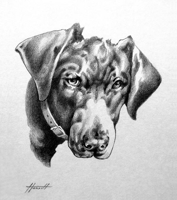 Dog Drawing - Youre Kidding by Patricia Howitt