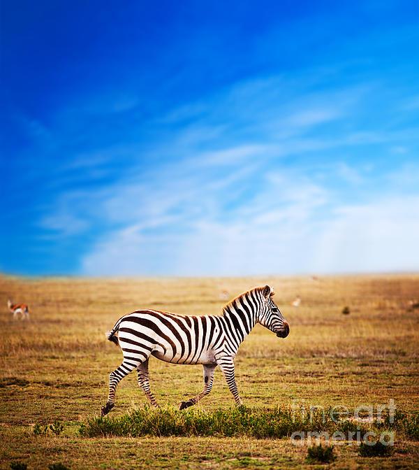Africa Photograph - Zebra On African Savanna. by Michal Bednarek