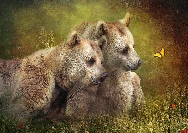 Brown Bear Photograph -  Bear Hugs by Trudi Simmonds