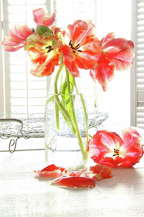 Background Photograph - Beautiful Tulips In Old Milk Bottle  by Sandra Cunningham