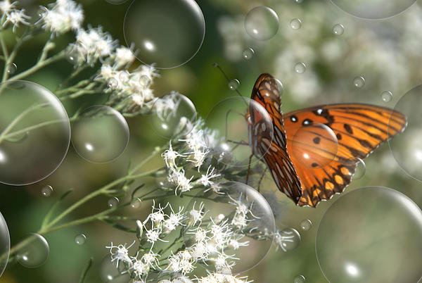Butterfly Photograph - Bubble Fly by Steven Richardson