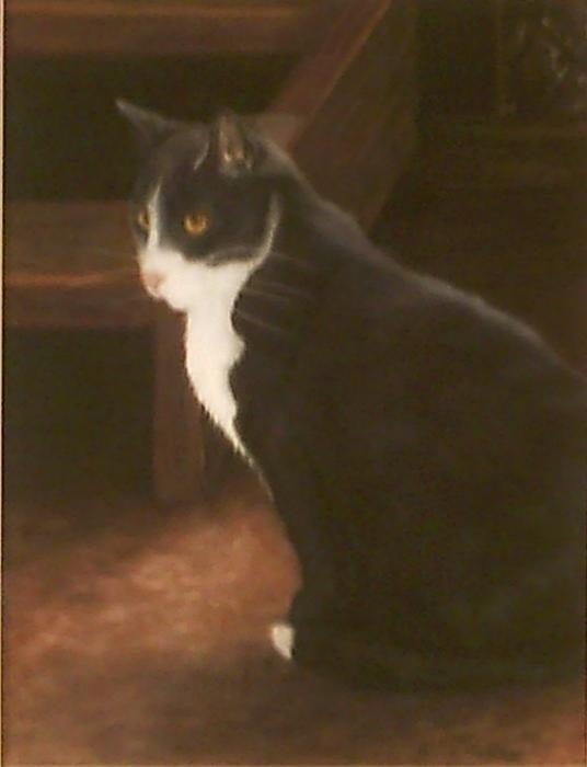 Pets Painting - Buddy by Bonnie Hallay