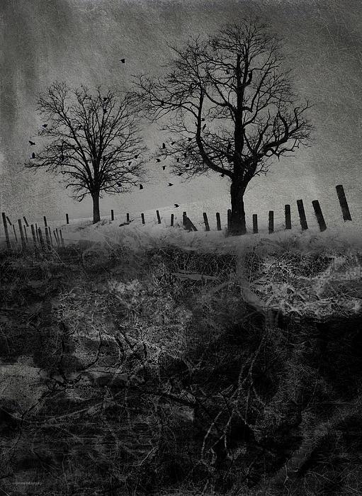 Trees Digital Art - Dark Roost by Ron Jones